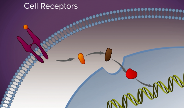 A screenshot of an animation depicting how targeted therapy works on cell receptors